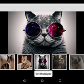 Wallpaper 4K Cat icon