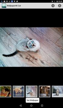 Wallpaper 4K Cat poster