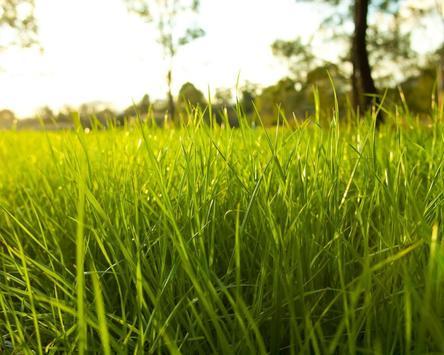 3D GRASS Live Wallpaper HD screenshot 3