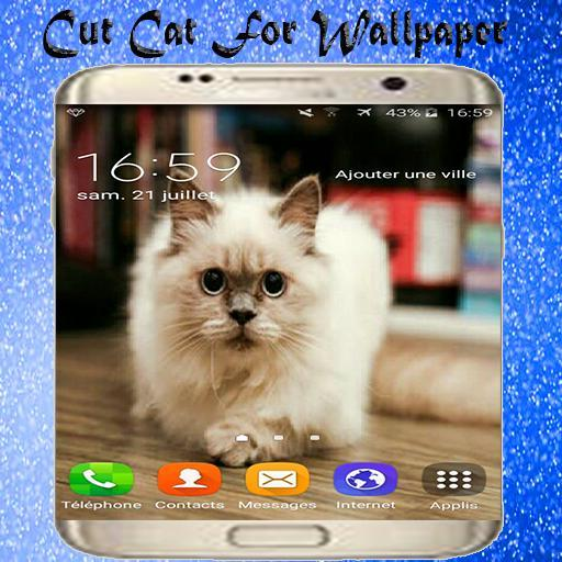 Cute Cat Hd Wallpapers For Android Apk Download
