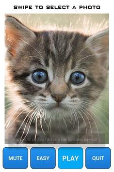 Kitten Puzzle Game poster