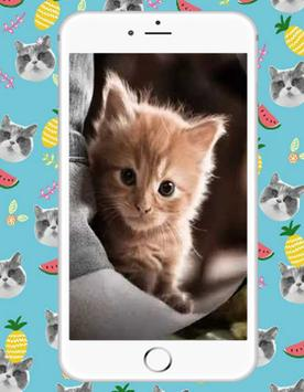 Sweet Kitty Cat poster