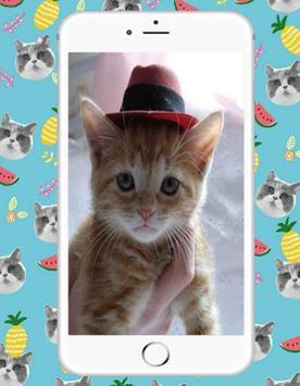 Sweet Kitty Cat screenshot 1