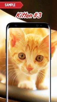 Kitten Wallpapers screenshot 3
