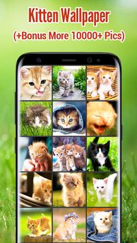 Kitten Wallpapers poster