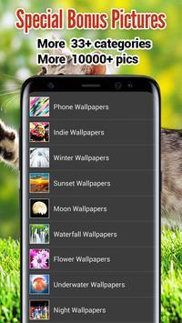 Kitten Wallpapers apk screenshot