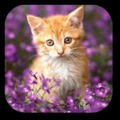 Double Cat Live Wallpaper icon