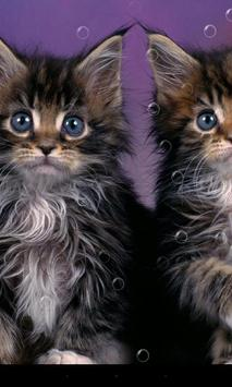 Double Cat Live Wallpaper apk screenshot