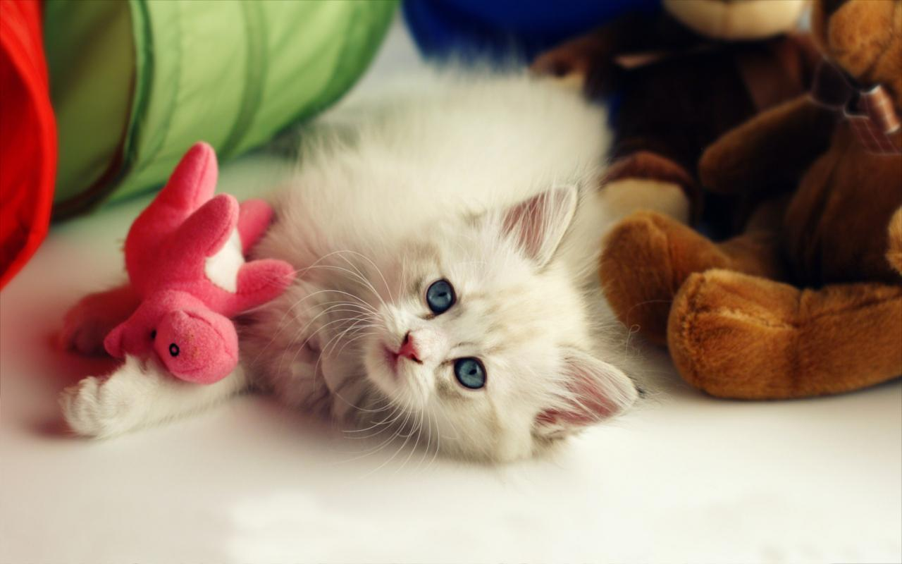 Fluffy Cat Live Wallpaper Apk Screenshot