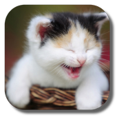 Funny Cat Live Wallpaper APK