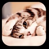 Lazy Cat icon