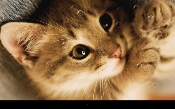 Lazy Cat screenshot 4