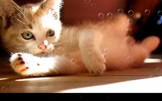 Lazy Cat screenshot 5