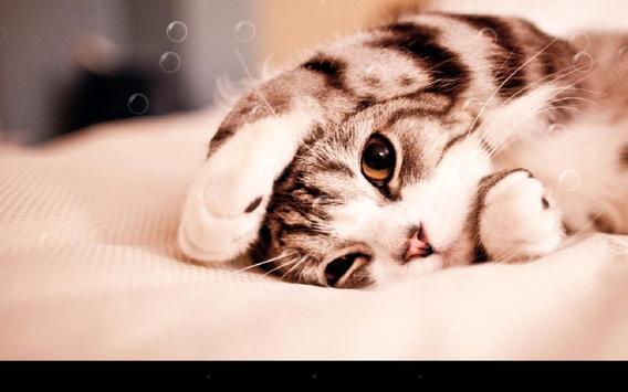 Lazy Cat screenshot 6
