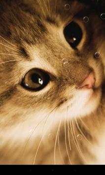 Lazy Cat Live Wallpaper apk screenshot