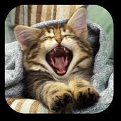 Pussycat Live Wallpaper icon