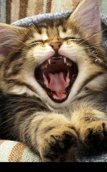 Pussycat Live Wallpaper apk screenshot