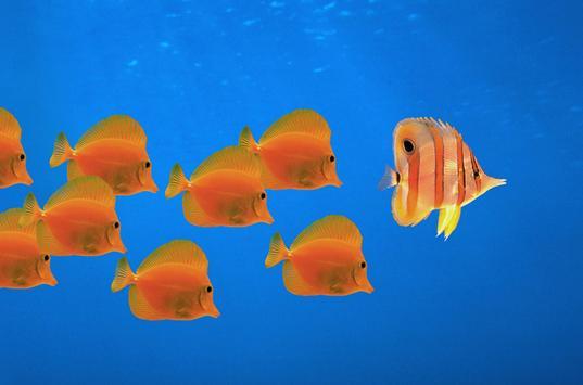 Fish - HD Wallpapers apk screenshot