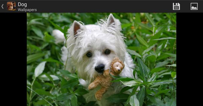 Dogs - HD Wallpapers apk screenshot