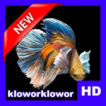 Betta Fish 3D Live HD apk screenshot