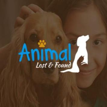 Animal Lost and Found poster