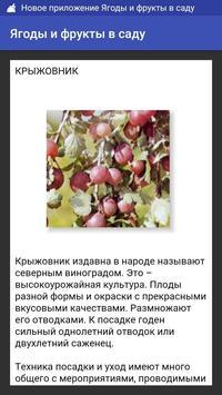 Ягоды и фрукты в саду poster