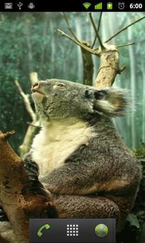 koala bear wallpapers apk screenshot