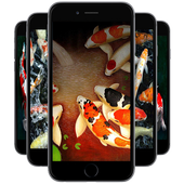 Koi Wallpapers icon