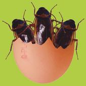 Blattodephobia icon
