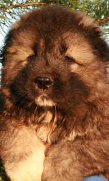 Caucasian Shepherd Dog apk screenshot