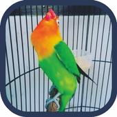 Masteran Lovebird Ngekek Offline Mp3 icon