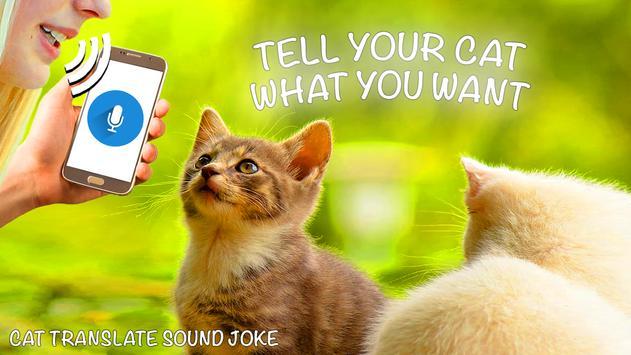 Cat Translate Sound screenshot 12
