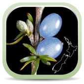 NZ Coprosma Key icon