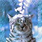 Cat in the snow LW icon