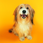 Cute Dogs Live Wallpapers icon