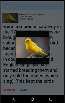 Animal Kingdom screenshot 4