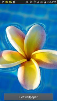 Flower Ripple Live Wallpaper screenshot 7