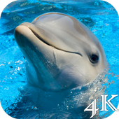 Dolphins 4K Live Wallpaper icon