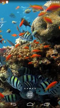 Sea Life 4K Wallpapers apk screenshot
