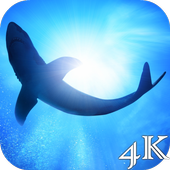 Shark 4K Live Wallpaper icon