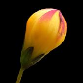 Floramo icon