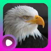 Suara Burung Elang icon