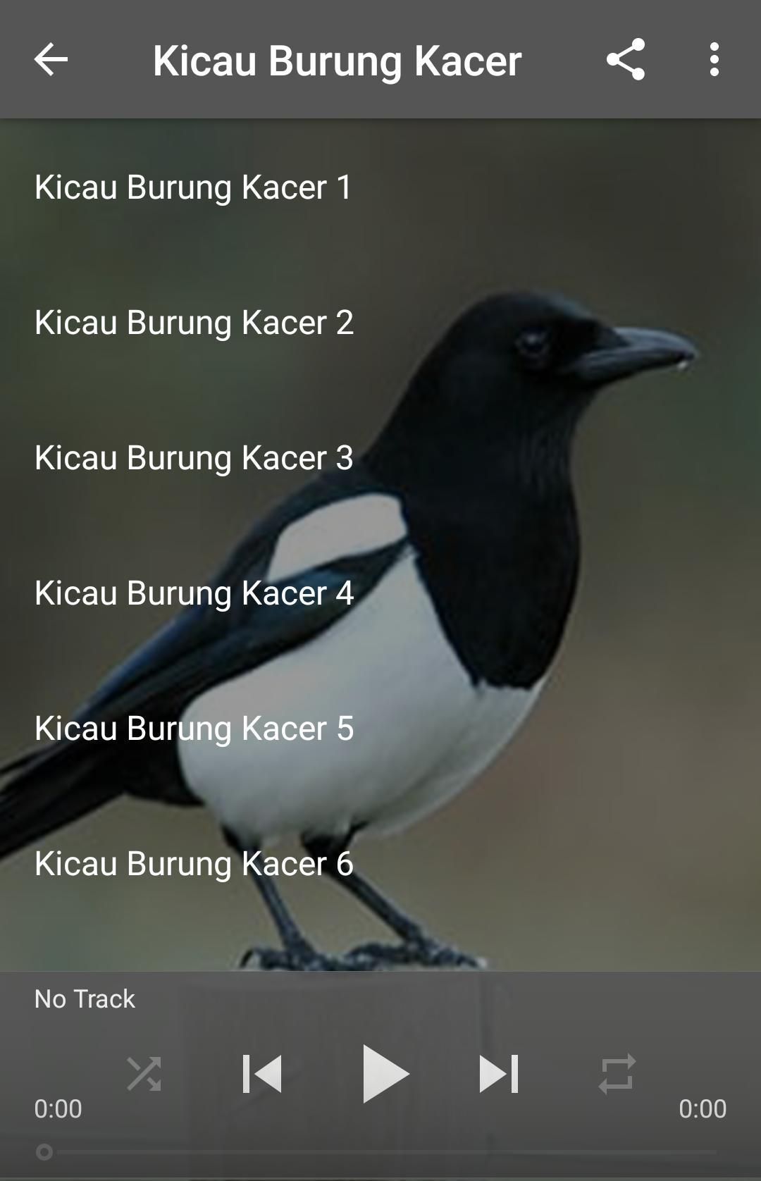 Kicau Burung Kacer For Android Apk Download