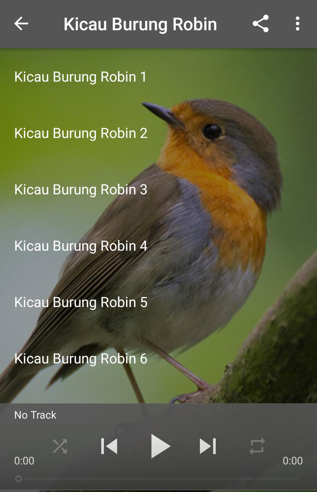 Kicau Burung Robin For Android Apk Download