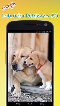 Labrador Retriever Wallpaper apk screenshot