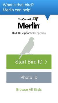 Merlin Bird ID poster