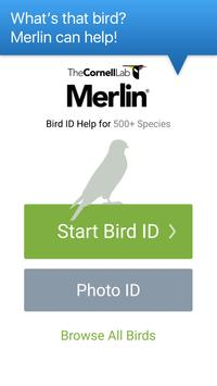 Merlin Bird ID by Cornell Lab of Ornithology poster