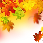 Autumn Leaves Wallpapers icon