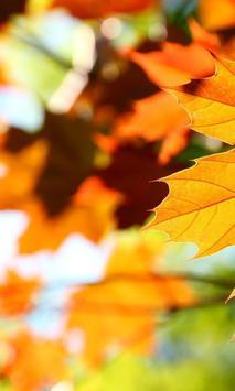 Autumn Leaves Wallpapers screenshot 1