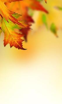 Autumn Leaves Wallpapers screenshot 2